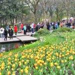 Crowds meandering around the tulip fields