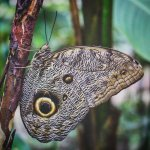 Photo of Pilpintuwasi Butterfly Farm
