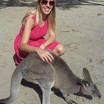 Cute Kangaroo