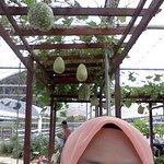 Giant Gourds at the herbs farm