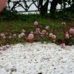Even the little shrubs grown on the drains are beautiful