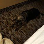 Photo de Days Inn & Suites Logan