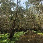 Tra Su Bird Sanctuary Foto