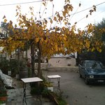 the front yard in December