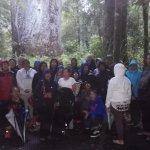From concrete jungle to Te Matua o te Ngahere.