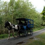 Foto de Muckross House, Gardens & Traditional Farms