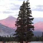 Photo of Tioga Pass