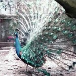 Photo of Hangzhou Zoo