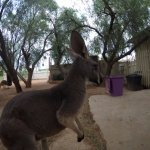 Foto di Josephine's Gallery & Kangaroo Orphanage