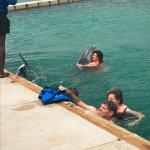 Dolphin photo opt