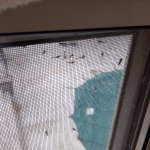 Lake Flies everywhere (not hotel's fault) but broken window screen allowed lots into bedroom