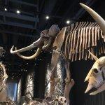 Dinos y mamuts