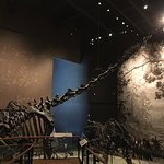 Dino cuellilargo