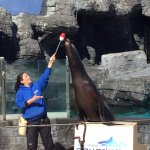Sea Lion Show - very informative and fun (we watched two shows)