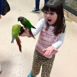 Needless to say my daughter loved the aviary!