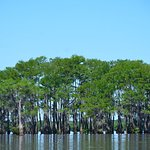 Photo de McGee's Landing - Atchafalaya Basin Swamp Tours