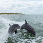 Dolphins playing alongside the boat!