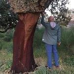 Foto de Los Chozos de la Roca