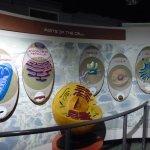 Cell Exhibit