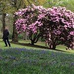 Bowood Woodland Gardens