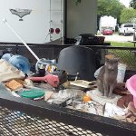 Trailer full of junk and cats at a long term person's site.