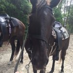 Layla (awesome mare)