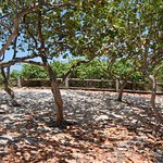 dappled shade along a trail