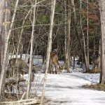 Deer on the nature trail.