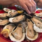 big beautiful and tasty oysters on the half-shell
