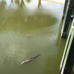 gator and turtle outside
