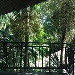 From the Balacony of my room, early morning
