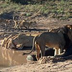 Foto de Ngoma Safari Lodge