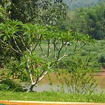 Photo de Elephant Village Sanctuary Day Trips