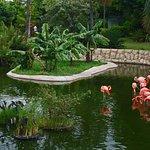 Jungle Island Foto