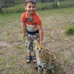 Walker the Serval