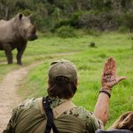 Rhino on Game Drive At Sibuya