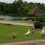 Foto di Lake Tiak-O'Khata Resort