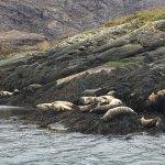 Jolly seals.