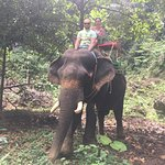 Photo de Kok Chang Safari Elephant Trekking