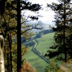 stunning views of hedge roads and sheep