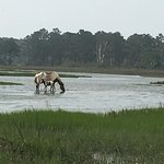 We took the am boat tour of the island and it was heaven! Lots of views of the Assateague wild p