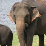 au milieu d'un troupeau d'éléphants