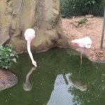 Shouldn't flamingos be pink...?