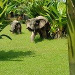 Photo of Arawan Krabi Beach Resort