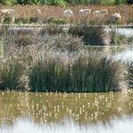 paysage du marais