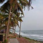 Photo of Palm Tree Heritage
