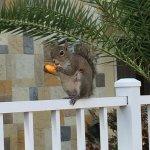 Friendly Squirrel eating a wotsit!!!!