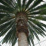Amazing palms