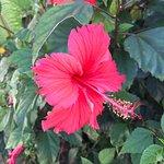 Photo of Uroa Bay Beach Resort