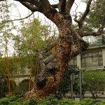 Matured tree.